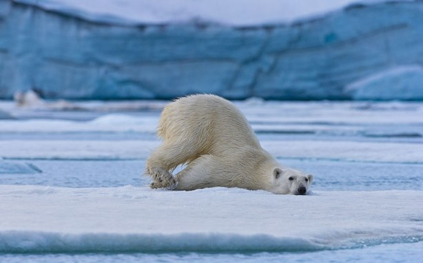 Abandoned...like a polar bear on an ice floe